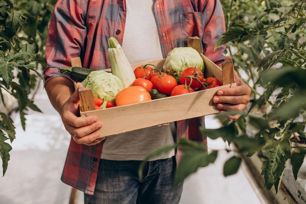 Maraicher porte une caisse de légumes